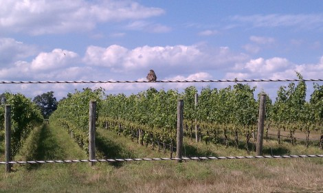 Bird at One Woman Winery