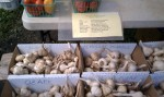 North Fork Garlic Festival