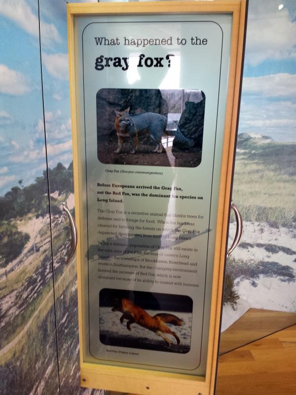 Fox exhibit