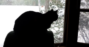 boo boo watches the snow