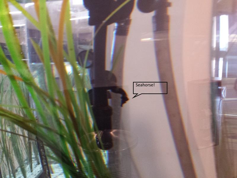 seahorse SOFO