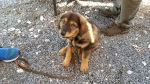 Ian Wile's Puppy